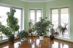 Beautiful winter garden interior with hardwood floors. In new home Royalty Free Stock Photography