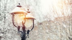 Beautiful winter greeting card with with trees cover snow, street light and slow motion snowfall.  stock video footage