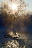 Beautiful winter landscape. Scene with frozen trees and birds in the river Royalty Free Stock Photography