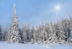 Beautiful winter landscape Stock Images
