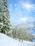 Beautiful winter landscape. With snow covered trees Royalty Free Stock Photo