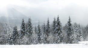 Beautiful winter landscape stock image