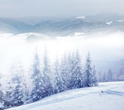 Beautiful winter landscape Royalty Free Stock Photo