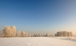 The beautiful winter landscape Stock Images