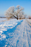 Beautiful winter landscape. Stock Photography