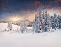 Beautiful winter landscape. In the mountains. Sunset stock photos