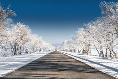 Beautiful winter landscape. With road and snow-covered trees Stock Images