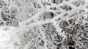 Snow on the branches. Beautiful winter landscape. Abstract mystical forest background. Beauty branches wallpaper landscapes. Beautiful winter landscape. Abstract Royalty Free Stock Photos