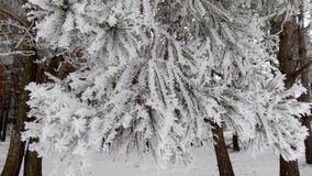 Magical branch. Beautiful winter landscape. Abstract pine forest background. Pines branches wallpaper. Beautiful winter landscape. Abstract pine forest Royalty Free Stock Images