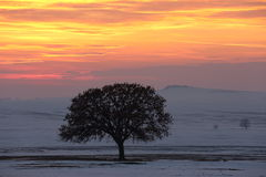 Beautiful winter landscape. Alone tree on meadow at sunset at winter Royalty Free Stock Photography