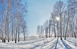 Beautiful winter landscape with bright sun and shadows Stock Photography