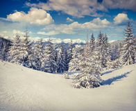 Beautiful winter landscape in Carpathian mountains. Royalty Free Stock Images
