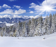 Beautiful winter landscape in the Carpathian mountains. Ukraine, Stock Images