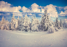 Beautiful winter landscape in the Carpathian mountains. Ukraine, Royalty Free Stock Images