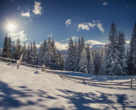Beautiful winter landscape in Carpathian mountains. Ukraine, Royalty Free Stock Photos