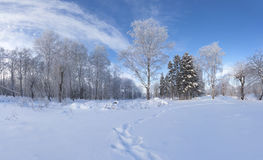 Beautiful winter landscape in city park Stock Photography