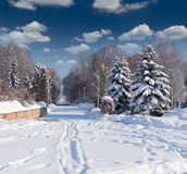 Beautiful winter landscape in city park Royalty Free Stock Image