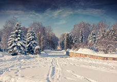 Beautiful winter landscape in the city park. Royalty Free Stock Images