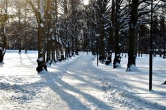 Winter allé. Beautiful winter landscape in the city`s big park in Norrköping Royalty Free Stock Images
