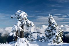 Winter trees covered with snow in mountains above clouds. Beautiful winter landscape in clear day  in Mount Seymour Provincial Park after snowstorm. Vancouver royalty free stock photo