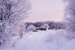 Beautiful winter landscape, in a field with snow-covered tall grass. stock image