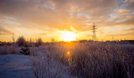 Beautiful winter landscape, in a field with snow-covered tall grass. stock photos