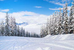 Beautiful winter landscape with fir trees. Les Arcs, France Royalty Free Stock Photo