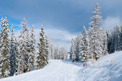 Beautiful winter landscape with fir trees. Les Arcs, France Stock Photography