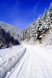 Beautiful winter landscape with fir trees Stock Photography