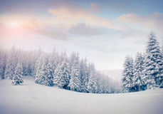 Beautiful winter landscape in the foggy mountains. Royalty Free Stock Images