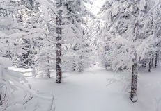 Beautiful winter landscape in forest Royalty Free Stock Images