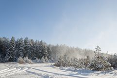 Beautiful winter landscape in the forest. royalty free stock images