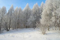 Beautiful winter landscape in forest Royalty Free Stock Image