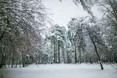 Beautiful winter landscape in the forest. The trees are covered with white snow in winter. stock images