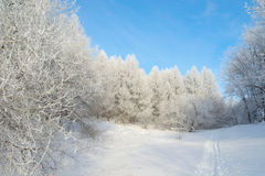 Beautiful winter landscape in forest Royalty Free Stock Photography