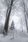 Stunning landscape, frosted trees Stock Photo