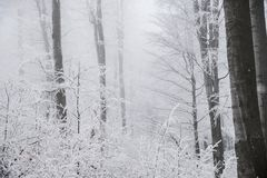 Stunning landscape, frosted trees Royalty Free Stock Images