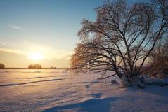 Beautiful winter landscape with frozen lake, big tree and sunset Royalty Free Stock Photo