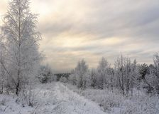 Beautiful Winter landscape grass and trees in snow royalty free stock photos