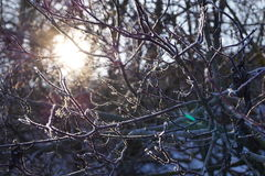 Beautiful winter landscape like  fairy tale the sun shines through the branches of the tree Stock Images