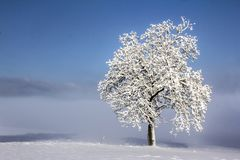 Cold winter landscape royalty free stock photography