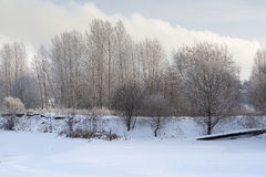 A beautiful winter landscape. Morning in the snowy woods Stock Images