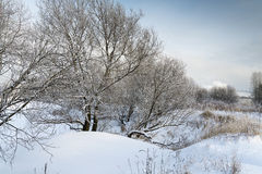 A beautiful winter landscape. Morning in the snowy woods Royalty Free Stock Photo