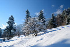 Beautiful winter landscape Stock Image