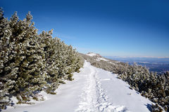 Beautiful winter landscape in the mountain. Empty path Stock Image