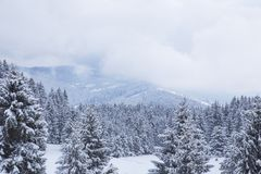 Beautiful winter landscape at the mountain, fir tree forests cov Stock Photos