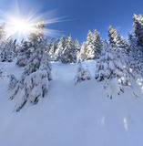 Beautiful winter landscape in mountain forest. Royalty Free Stock Photo