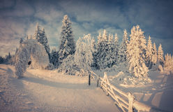 Beautiful winter landscape in the mountain forest. Royalty Free Stock Image