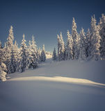 Beautiful winter landscape in the mountain forest. Stock Images