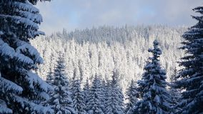 Beautiful winter landscape in mountain. Forest with trees in snow on sunny winter day. scenic view of snowy forest. Pine trees cov. Ered with ice and snow on stock video
